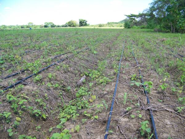 Pin sistemas de riego localizado para hortalizas y - Sistema riego goteo ...